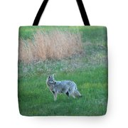 Spring Coyote  Tote Bag