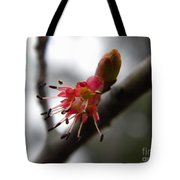 Spring Flower Closeup 2 Tote Bag