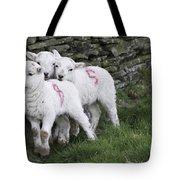 Spring Lambs 2 Tote Bag