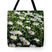Spring Loyal Love Daisies  Tote Bag