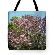 Spring Magnolia In Winter Park  Tote Bag