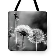 Spring Over... Tote Bag
