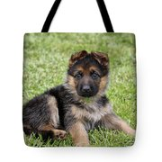 Spring Puppy Tote Bag