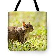 Spring Squirrel Tote Bag
