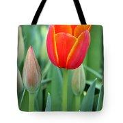 Spring Tulips 211 Tote Bag