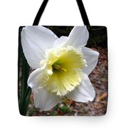 Spring's First Daffodil 1 Tote Bag