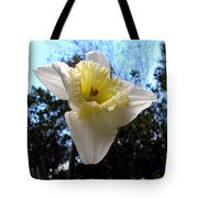 Spring's First Daffodil 2 Tote Bag