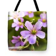 Springtime Blooms Violet Wood Sorrel 3 Tote Bag