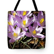 Springtime Crocuses  Tote Bag