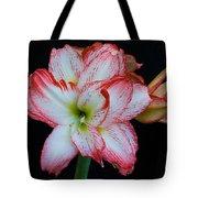 Springtime Florida Amaryllis Tote Bag