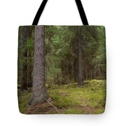 Spruce Forest  Tote Bag