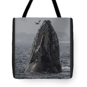 Spyhopping Humpback Whale In Monterey Bay Tote Bag
