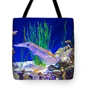 Squid In Monterey Aquarium-california Tote Bag