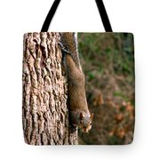Squirrel 6 Tote Bag