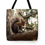 Squirrel 8 Tote Bag