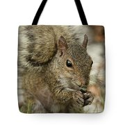 Squirrel And Nuts Tote Bag
