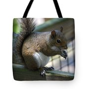 Squirrel II Tote Bag