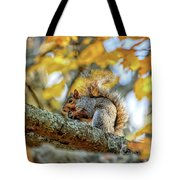 Squirrel In Autumn Tote Bag