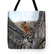 Squirrel In Cottonwood Tree Tote Bag