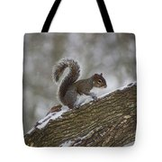 Squirrel In The Snow Tote Bag