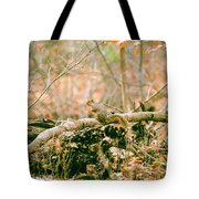Squirrel In The Woods  Tote Bag