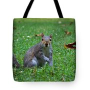 Squirrel Iv Tote Bag