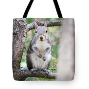 Squirrel Looking At Photographer And Waiting To Be Fed Tote Bag