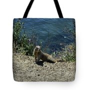 Squirrel Looking Back Over His Shoulder On The Coast Tote Bag
