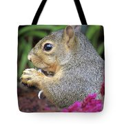 Squirrel - Morning Snack 02 Tote Bag
