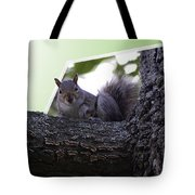 Squirrel On A Limb Tote Bag