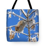 Squirrel On Icy Branches Tote Bag