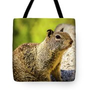 Squirrel On The Rock Tote Bag