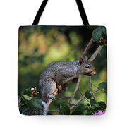 Squirrel Portrait Tote Bag