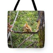 Squirrel Standoff Tote Bag
