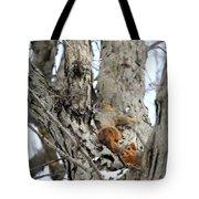 Squirrels At Play Vertically Tote Bag