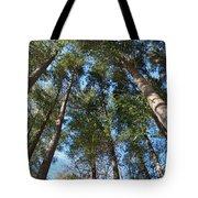 Squirrels Highway  Tote Bag