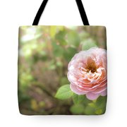 St. Cecilia Shrub Rose, Pink Rose Originally Produced By The Br Tote Bag