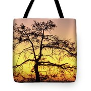 St Johns River Tree Tote Bag