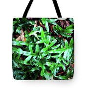 Staghorn Fern With Dead Leaves Tote Bag