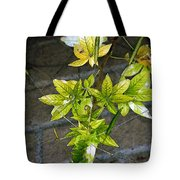 Stalk With Seed Pods Tote Bag