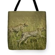 Stalking Cheetahs Tote Bag