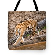 Stalking Tiger - Bengal Tote Bag