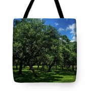 Stand Of Oaks Tote Bag