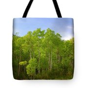 Stand Of Quaking Aspen Trees Tote Bag