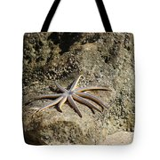 Star Fish On The Rock Tote Bag