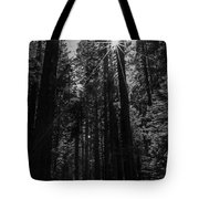 Star In The Forrest Tote Bag