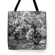 Star Magnolia Trees Tote Bag