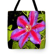 Star Treatment Tote Bag