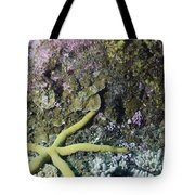 Starfish On A Coral Reef Tote Bag