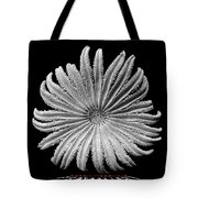 Starfish Transparency Tote Bag